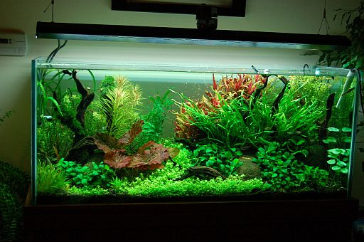 lighting in planted aquariums. Black Bedroom Furniture Sets. Home Design Ideas