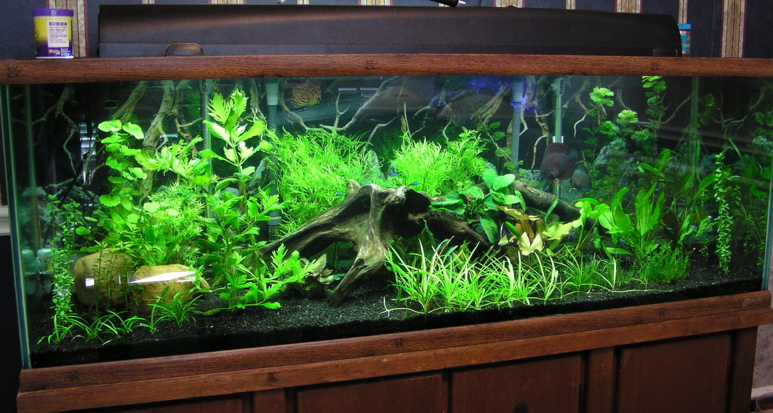 Hi Don, My planted tank is doing well. I wanted to send you a picture ...